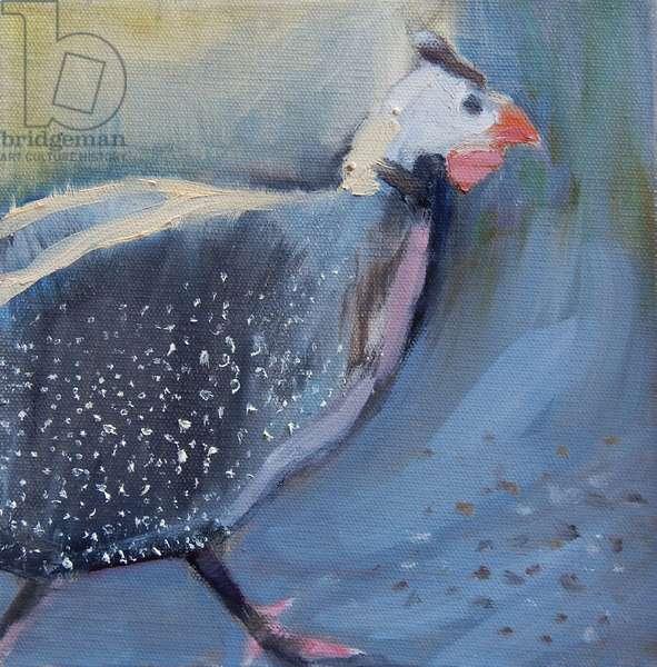 Guinea Fowl Four, 2014, (oil on canvas)