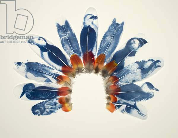 Audubon's Headdress, 2012 (printed and collaged feathers)