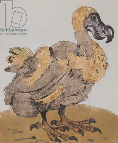 Dodo Monoprint, 2007, monoprint on paper