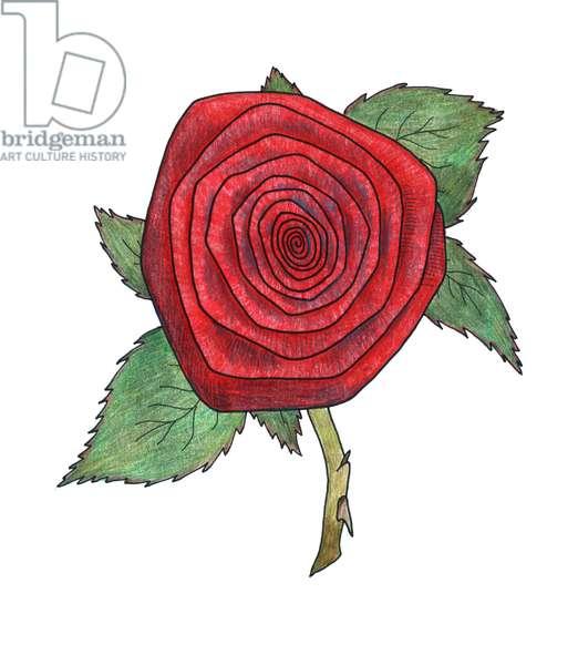 Rose 4, 2013, (coloured pencil)