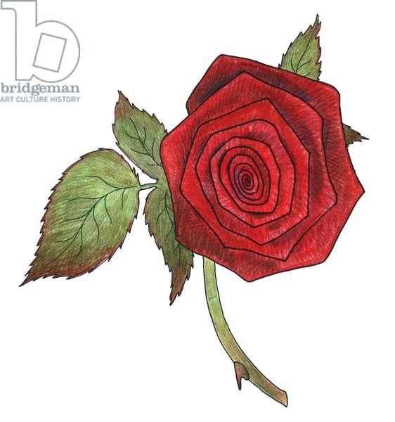 Rose 5, 2013, (coloured pencil)