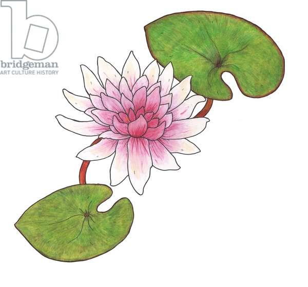 Waterlillies 2013, (coloured pencil)