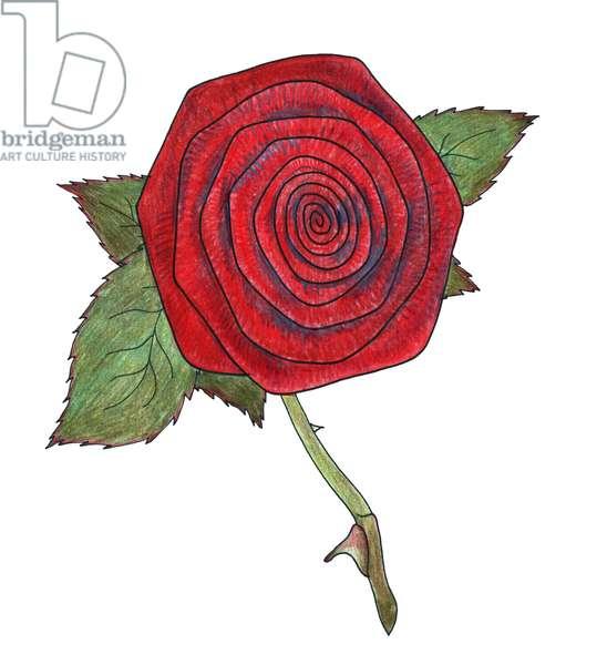 Rose 6, 2013, (coloured pencil)