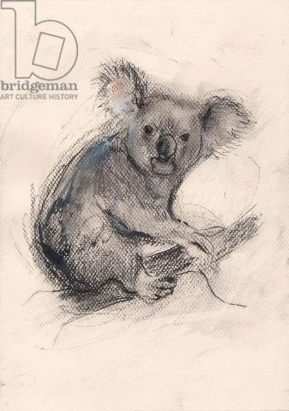 Koala, 2013, (pencil)