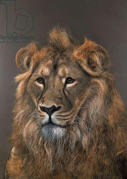 Asiatic Lion, 2015, (acrylic)