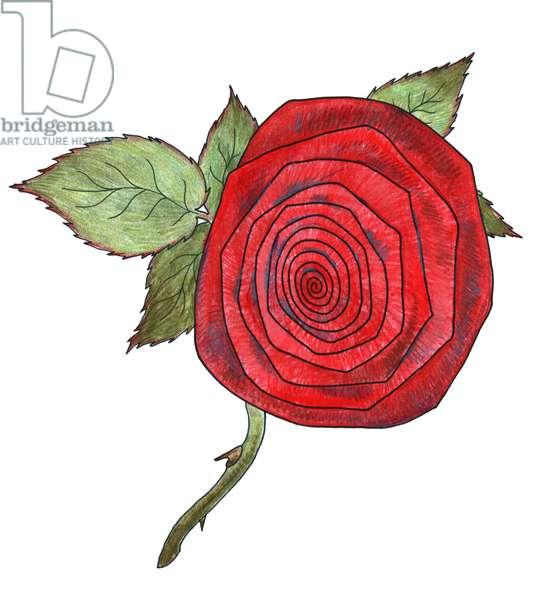 Rose 7, 2013, (coloured pencil)