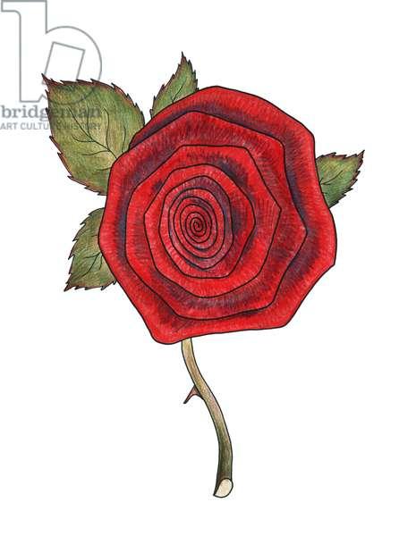 Rose 2, 2013, (coloured pencil)