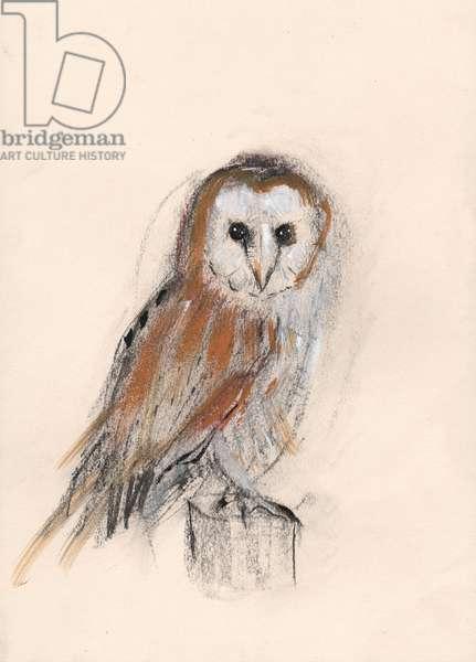 Barn Owl, 2013, (pastel)