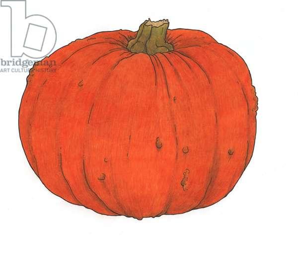 Pumpkin study, 2013, (coloured pencil)