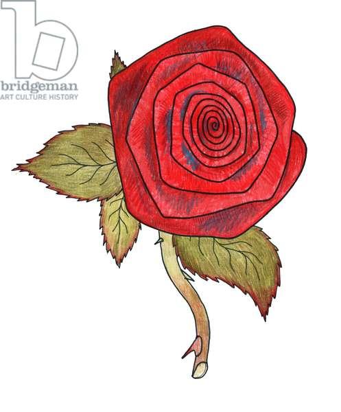Rose 1, 2013, (coloured pencil)