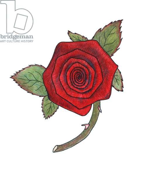 Rose 3, 2013, (coloured pencil)