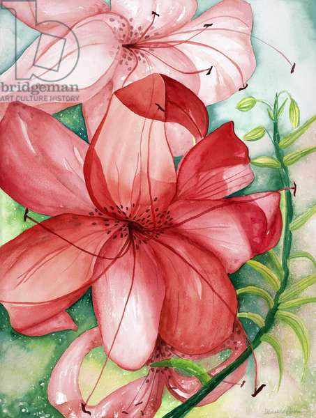 Tigerlily, 2007 (watercolor)