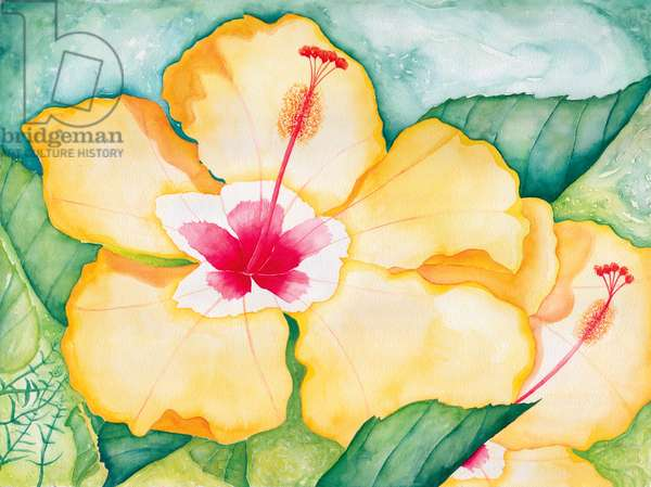 Yellow Hibiscus, 2006 (watercolor)