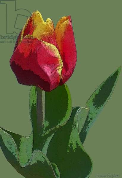 Red Tulip. 2012, (mixed media/digital)