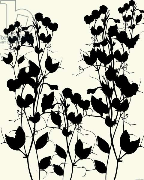 Sweet Pea Silhouette, 2012, (mixed media/digital)