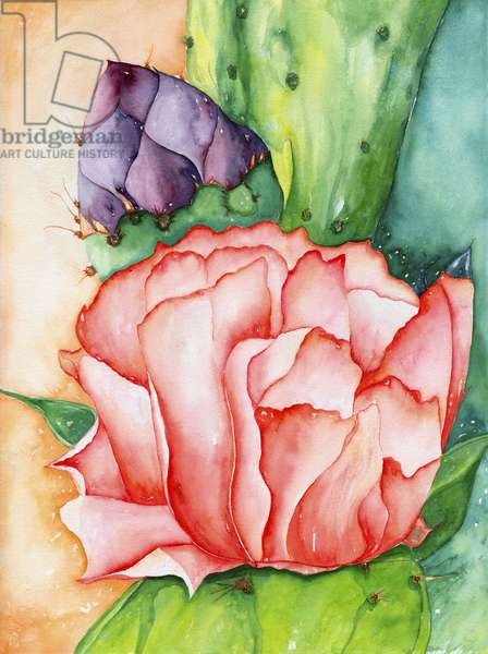 Desert Bloom, 2007, (watercolor)