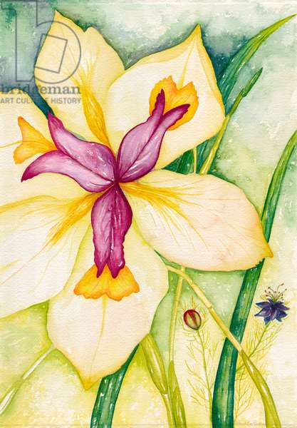 Lily and Friends, 2007 (watercolor)