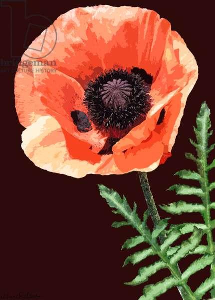 Orange Poppy, 2012, (mixed media/digital)