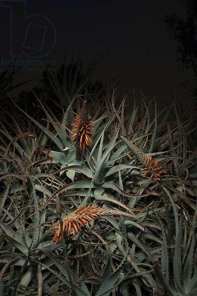 Night Garden #2