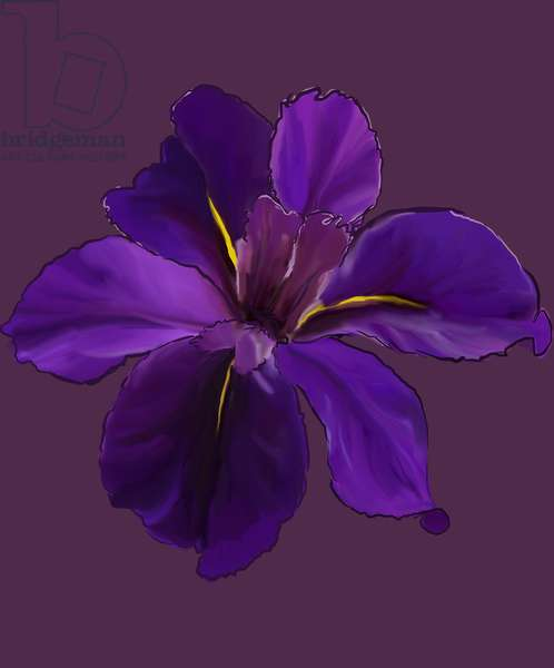 Iris, 2015, digital