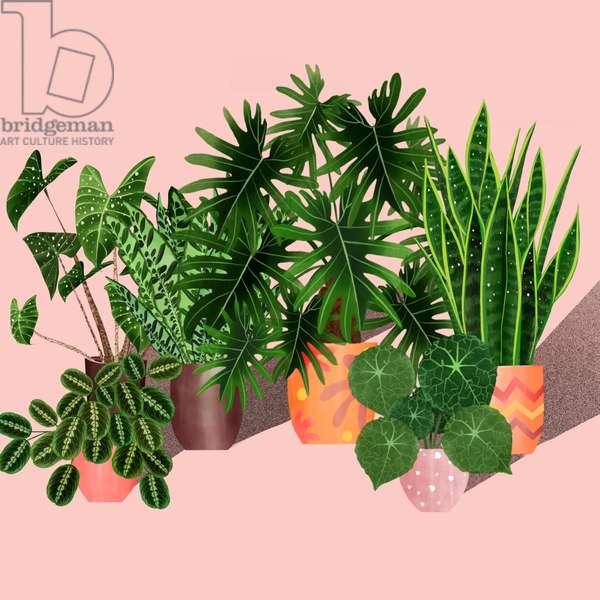 Plantgang, 2019, digital