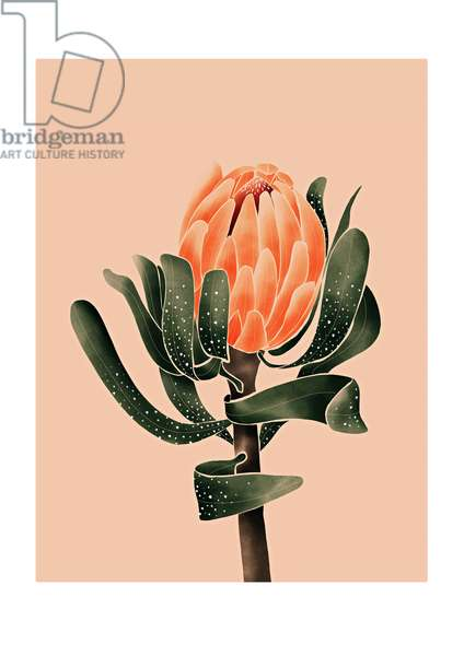 King Protea, 2019, digital illustration
