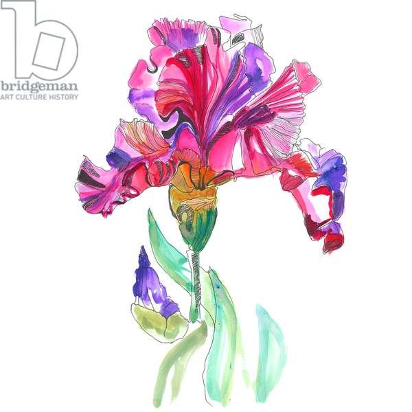 Iris, 2015, watercolour