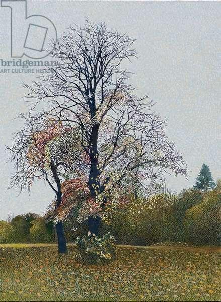 Tree On Bodmin Hill (oil on board)