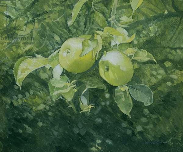 Apples (oil on canvas)