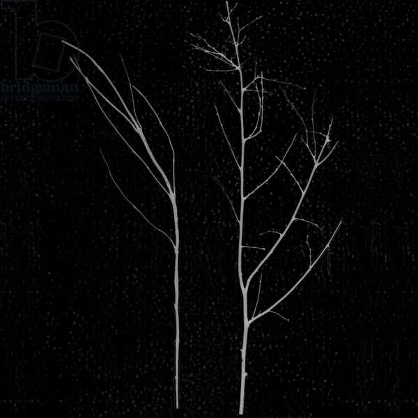 territori innevati - due alberi notte (a), 2012, photographic contamination