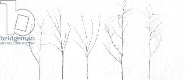 Territori Innevati - cinque alberi giorno, 2012, photographic contamination