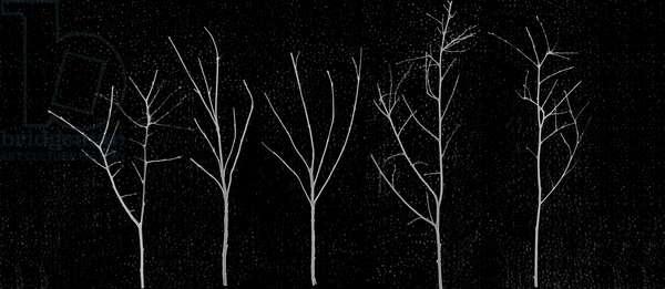 Territori Innevati - cinque alberi notte, 2012, photographic contamination