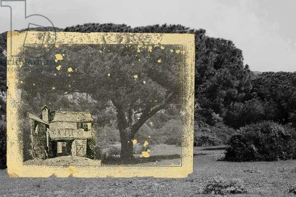 vivi ritirato e nella quiete e sii selvaggio  (5), 2011, photographic contamination