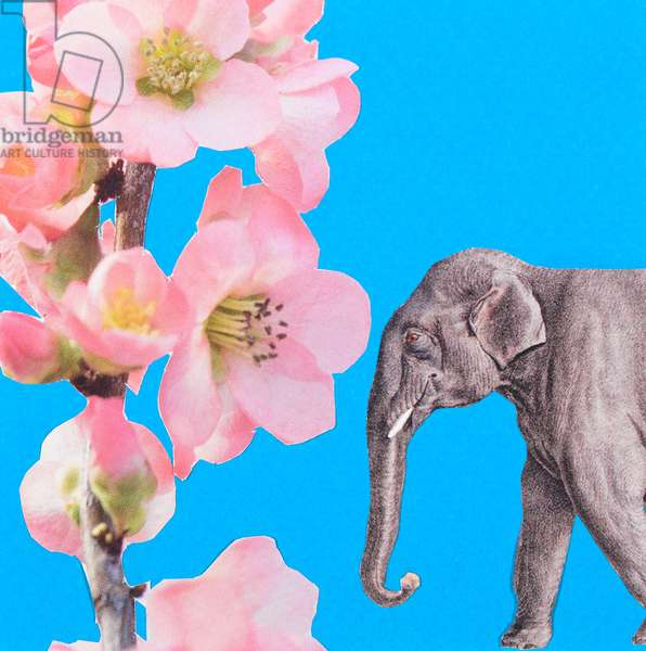 Elephant Blossom, 2018, collage