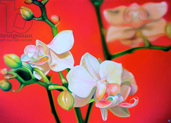 Pink Orchid, 2011, (oil on canvas)