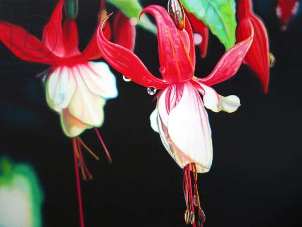 Fuchsia Lantern, 2004, (oil on canvas)