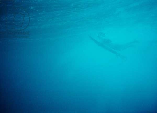 Duck_Maldives