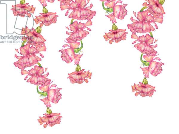 Hanging Carnations, 2021 (coloured pencil)