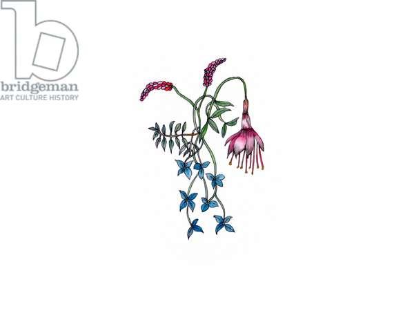 Fuchsia, 2021 (w/c)
