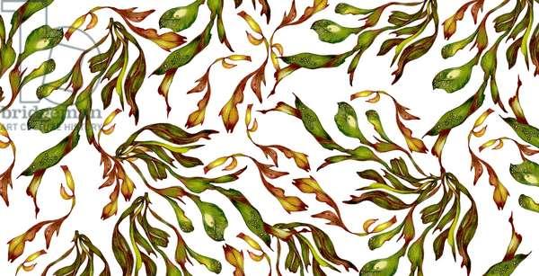 Seaweed, 2021, (coloured pencil)