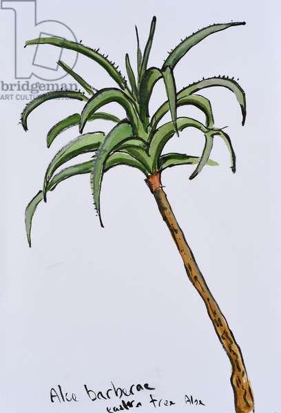 Eastern Tree Aloe, 2017 (watercolour on paper)
