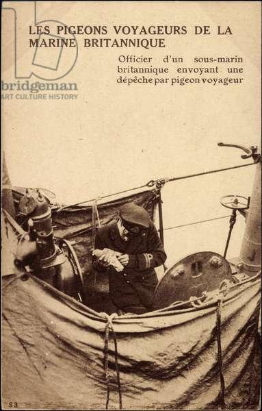 British Navy Passenger Pigeons