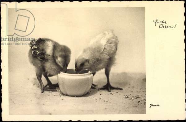 Happy Easter, chicks drink from water bowl, Amag