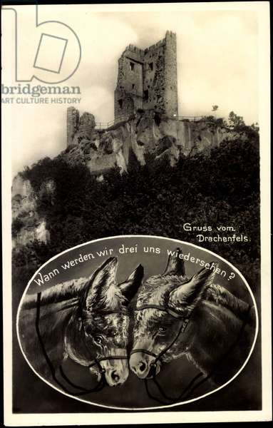 Königswinter Rhine, view of the ruin Drachenfels, two donkeys