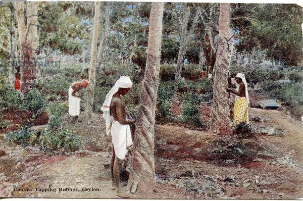 Coolies Tapping Rubber, Ceylon, c.1900-20 (hand-coloured photograph)