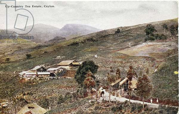 Up-Country Tea Estate, Ceylon, c.1900-20 (hand-coloured photograph)