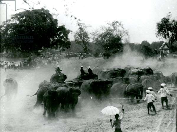Herding wild elephants in Ayutthaya, Siam (photo)