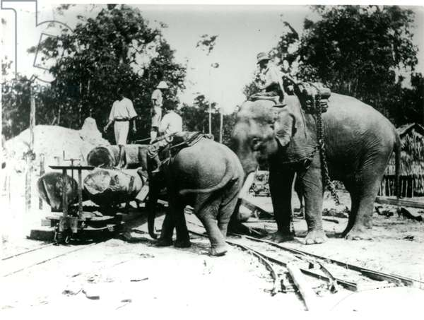 S. Siam, an elephant loading logs on a truck, c.1910-30 (b/w photo)
