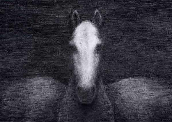 Pegasus at Twelfth Night, 2012, charcoal on paper. Photo credit: Justin Piperger