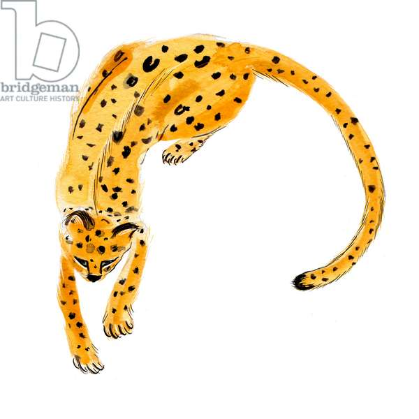 Curled Leopard, 2020 (w/c on paper)